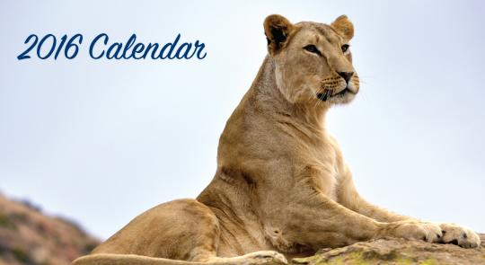 gratis-calendario-2016-com-fotos-de-animais